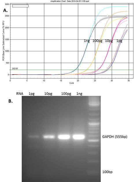 qpcr primer design all in one qpcr mix and validated primers genecopoeia