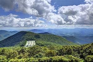 Appalachian Plateau Animals and Plants | Sciencing