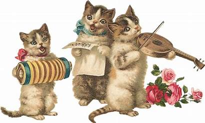 Tube Funny Chat Stuff Cats Centerblog Doina