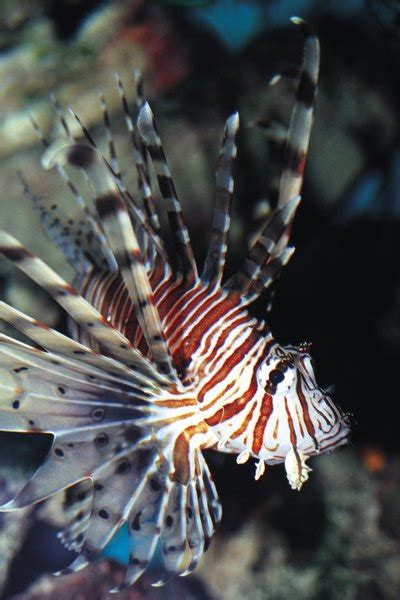determine  filter flow   aquarium pets