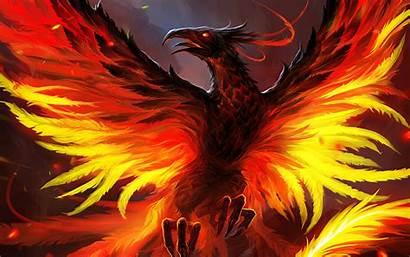 Phoenix Bird 4k Wallpapers Backgrounds 720p Wallpaperaccess