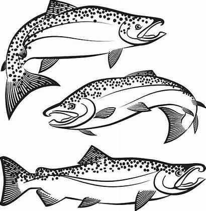 Salmon Vector Movement Swimming Fish Illustration Clip