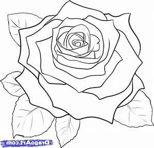 Rose Zeichnen Einfach Vom Bild Zum Stickmuster Teil 1 Bernina Blog
