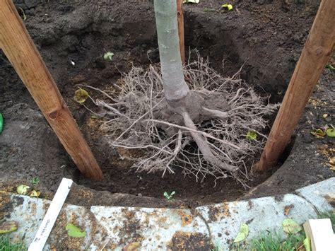 pflanzen ohne wurzeln b 228 ume pflanzen nikolaus lueneburg de