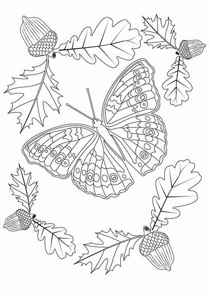 Coloring Butterfly Autumn Butterflies Garden Pages Insects