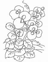 Pea Sweet Coloring Purple Flower Drawing Pages Getdrawings Sketch Template sketch template