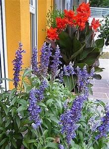 Canna Blüten Abschneiden : k belpflanzen f r terrasse s dlage und heiss page 2 ~ Lizthompson.info Haus und Dekorationen