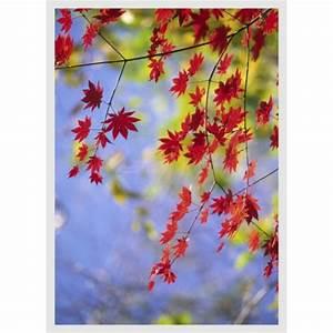 Rote Blätter Baum : rote bl tter am baum schaufensteraufkleber und ~ Michelbontemps.com Haus und Dekorationen