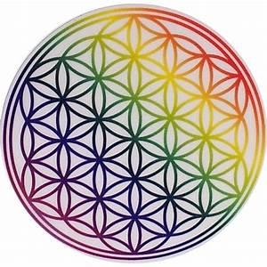 Blume, Des, Lebens, Regenbogen, 8cm, Ypsilon