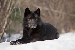 pet selection - How can I find a dog that looks like a ...