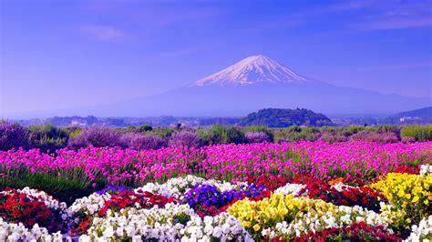 Spring In Japan Wallpapers
