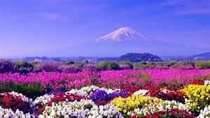 Spring, In, Japan, Wallpapers