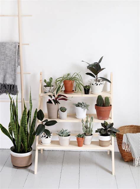 plant de cuisine fabriquer une étagère pour vos plantes shake my