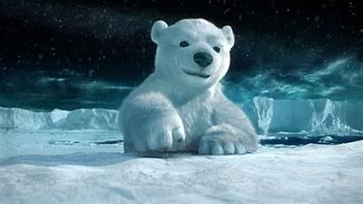 Bear Polar Night Wallpaperup Cg Snow Sign