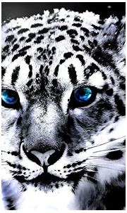 White Tiger Wallpaper Hd 1080P | Amazing Wallpapers