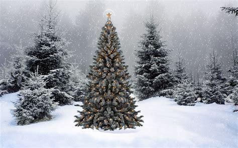 snowy christmas tree 881547 walldevil