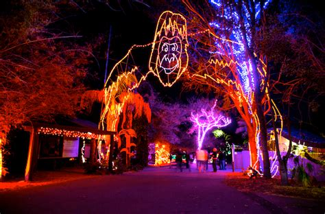 dc zoo lights the events across the valley that you must not