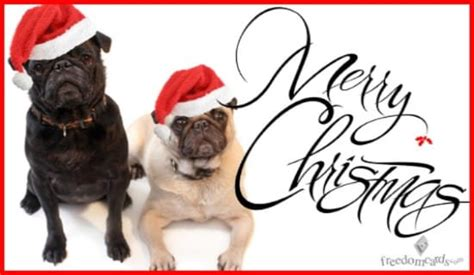 merry christmas christmas dogs ecard free holidays cards online