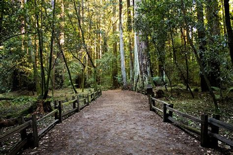 pictures of pathways free photo pathway footpath forest woods free image on pixabay 690652