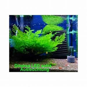 Aquarium Set Led : aquarium set diversa startup extra led set 40 cm komplett ~ Watch28wear.com Haus und Dekorationen