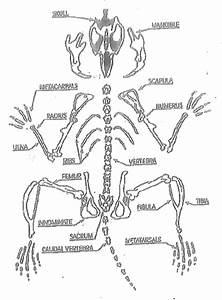 Owl Pellet Skeleton Worksheet