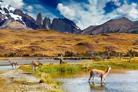Full Day Tour To Torres Del Paine National Park