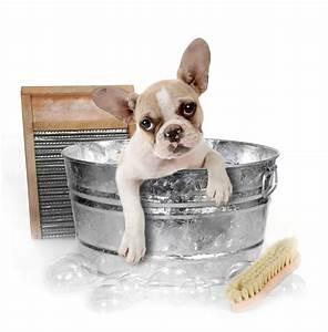 Charity Dog Wash and Dog Bake Sale DeKalb County Online