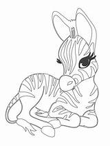 Zebra Templates Coloring Cute Template Cuddly Pages Animal Colouring Psd Tem Late Shape sketch template