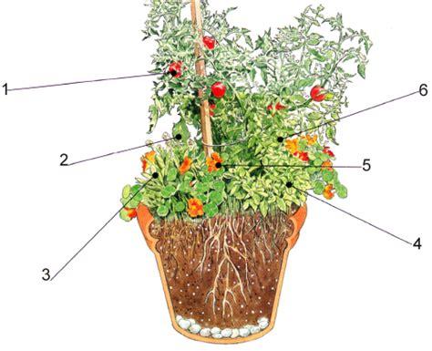 kraeuter und tomatentopf  naehrstoffreiche erde pflanzen