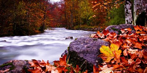 germany  autumn fall color river leaves orange