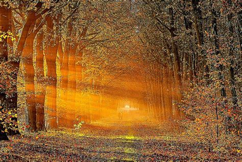 Animated Autumn Wallpaper - autumn screensavers free hd wallpapers