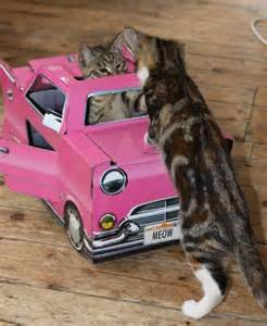 cats auto cat play houses pink cadillac iwoot