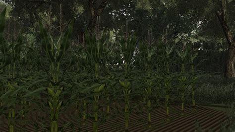 real corn hd texture   farming simulator  ls mod