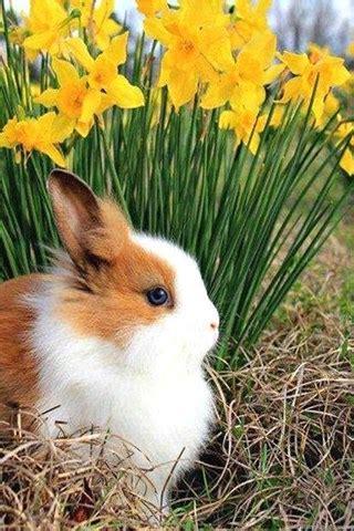 spring bunny brown animals white  desktop