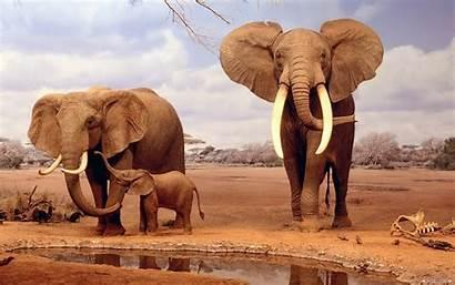 Safari African Desktop Elephants Wallpapers13
