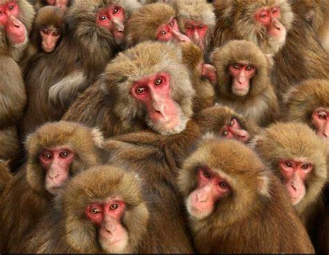jeux de cuisine gratuit pour filles colonie de babouins