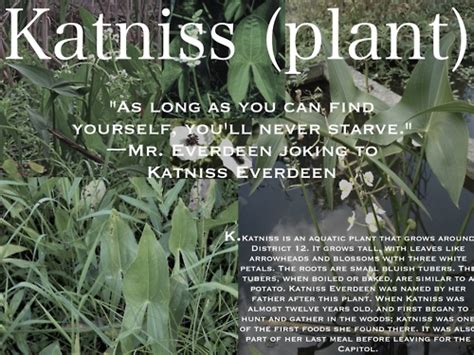is katniss a real plant the hunger games images katniss and katniss wallpaper and background photos 33371530