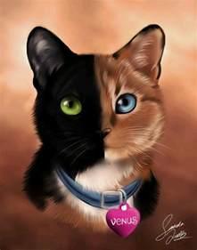 venus the cat venus the chimera cat animals venus and cat