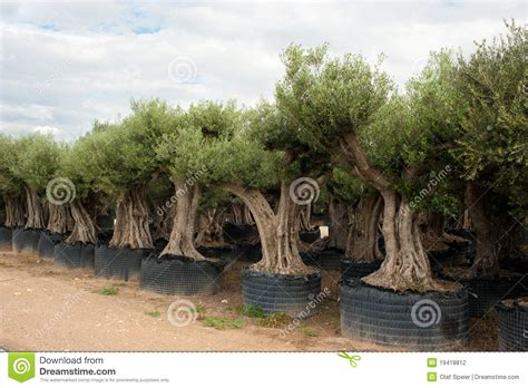 tree nurseries tree nursery stock photography image 19418812