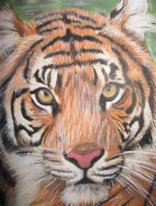 Tiger Face Drawing
