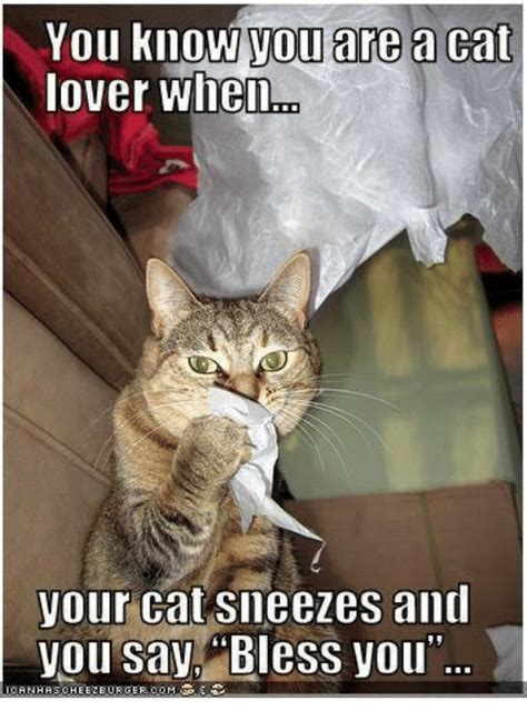 Cat Lover Meme You You Are A Cat Lover When Your Cat Sneezes And You