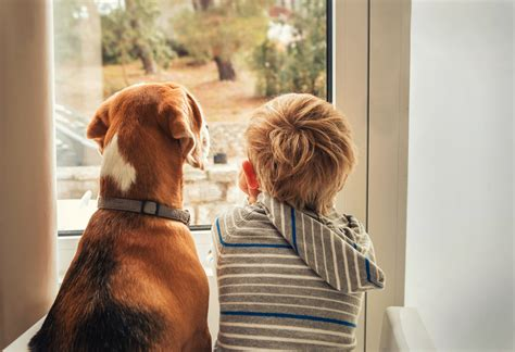 Top  Benefits Of Having A Dog Around The House