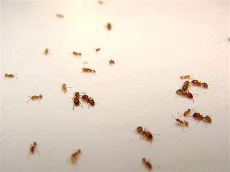 small ants 301 moved permanently