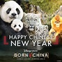 Born in China Group Tickets Now Available - LaughingPlace.com