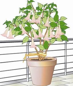 Große Winterharte Kübelpflanzen : 102 besten urban gardening bilder auf pinterest bambus ~ Michelbontemps.com Haus und Dekorationen