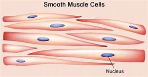Smooth Cells