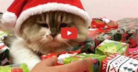 cute christmas kitty   protective   festive