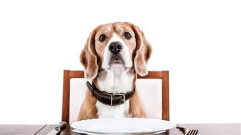 legge sull ingresso dei cani nei luoghi pubblici cani al ristorante cosa dice la legge unione nazionale