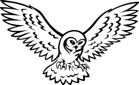 snowy owl drawing    clipartmag