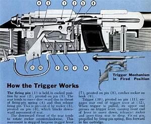 Winchester  22 Model 52 Rifle Trigger Mechanism Cutaway